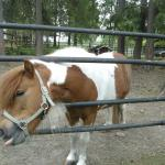Animals like a pony, horses, chikens, goats etc. can be  greeted in the area