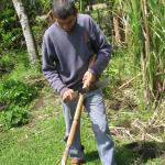 Cutting up sugar cane for us to taste