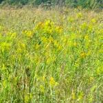 Restored Tall Grass Prairie at Homestead National Monument
