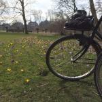 Black bikes in Vondelpark