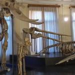 La sala degli scheletri