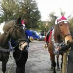 Christmas ride on the Heath, Guinness for my horse please?