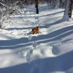 Our snowy walk (melted by Sunday)