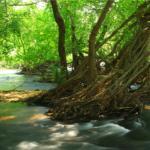 serenade river view