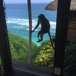 Beautiful views from the day spa complete with inquisitive monkeys