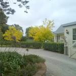ein kleiner Teil des Gartens mit altem Baumbestand, herrlichen Rosen. Agapanthus....