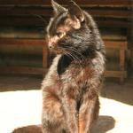 Черный кот, который постоянно чесался и сопливился (с лишаем на другом боку)