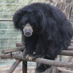 Wildlife SOS Elephant & Bear Sanctuary