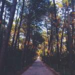 Дорога на пляж, 300 метров через лесок
