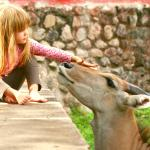 Emma & Paul, our resident friendly Eland