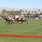 the beautiful ponies during the 3rd Chukker