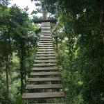 Stairs up to the first zip line