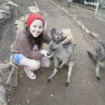Come feed the Kangaroos with us at Bonorong Park