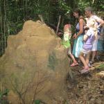 Giant Termite Mound