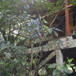 Vista desde el exterior de la cabaña