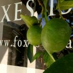 Pampered Organic Limes @ the City Cellar