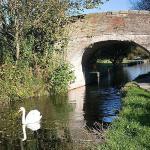 Sunny Serene Swan on the Monty