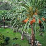 Dom Pedro Madeira - hotel Gardens