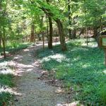 Tribesman resort has almost 2 miles of nature trails.