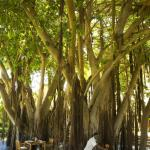Photo of Bushmans Kloof Wilderness Reserve & Wellness Retreat