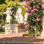 Spring in Gigognan