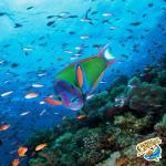 Come join us on snorkeling adventure