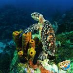 Amazing Marine Life!