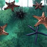 Starfish in various colors