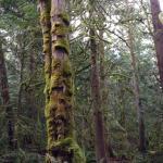 Treeeeeeessss