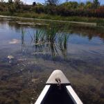 You can rent a canoe for a tranquil survey of the marsh. Family fun!