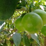 frutas por donde mires