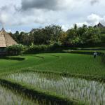 Visite des rizières avec le personnel de l'hôtel