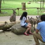 Feeding the kangaroos - a lovely experience!