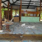 Alam Kotok Island Resort Foto