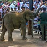 Small elephants feeding