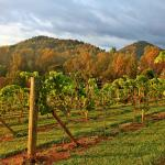 Did you know you can ride your bike to 6 different wineries from Asheville?