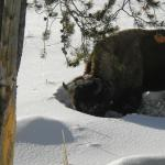 Photo de Rendezvous Snowmobile Tours West Yellowstone