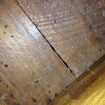 Mouse droppings in drawer