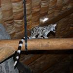Genet in the dining area of the hotel