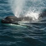 Excursiones que se pueden hacer, ver orcas