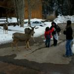 feeding tge deer