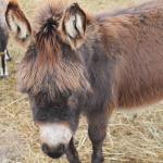 Jose the donkey at Kayben Farms