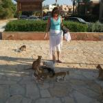 Lots of Kittens to Feed outside Tamr Hena in Downtown