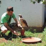 Preparing the falcon for a flight