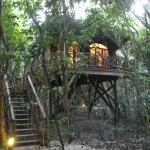 Tree House Room at Hamanasi