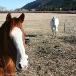 Horses in residence