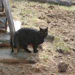 Jasper the Inn cat