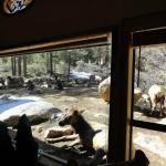 Wild Elk hang outside the resturant