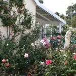 Patsy Durack's Rose Gardens