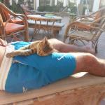 Zdrowe koty śpią nawet 14 h na dobę!